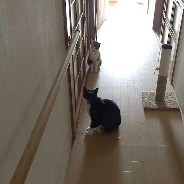 野良猫母子の気配を感じて様子を見にくる「エド」と「みかん」