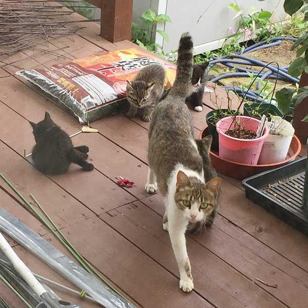 引っ越し翌日の野良猫親子