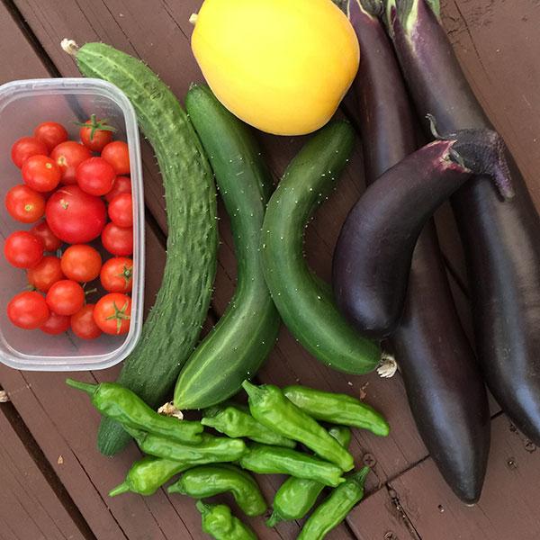 台風の前に収穫した野菜
