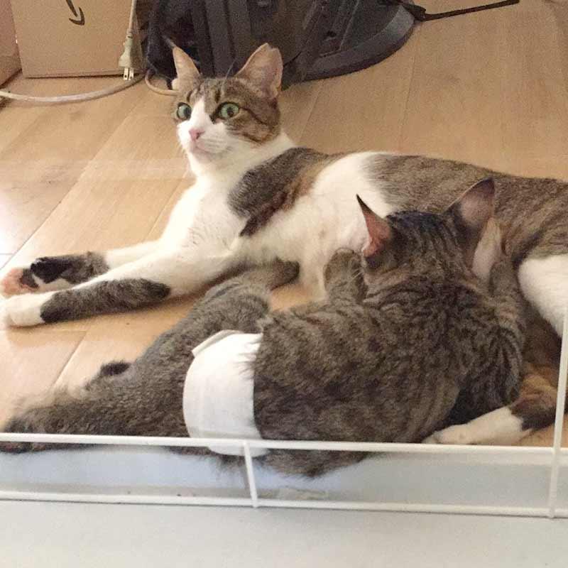 避妊手術後の子猫と母猫
