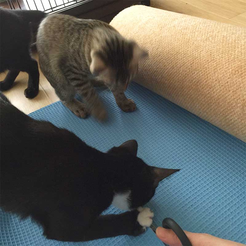 作業の邪魔をする子猫たち
