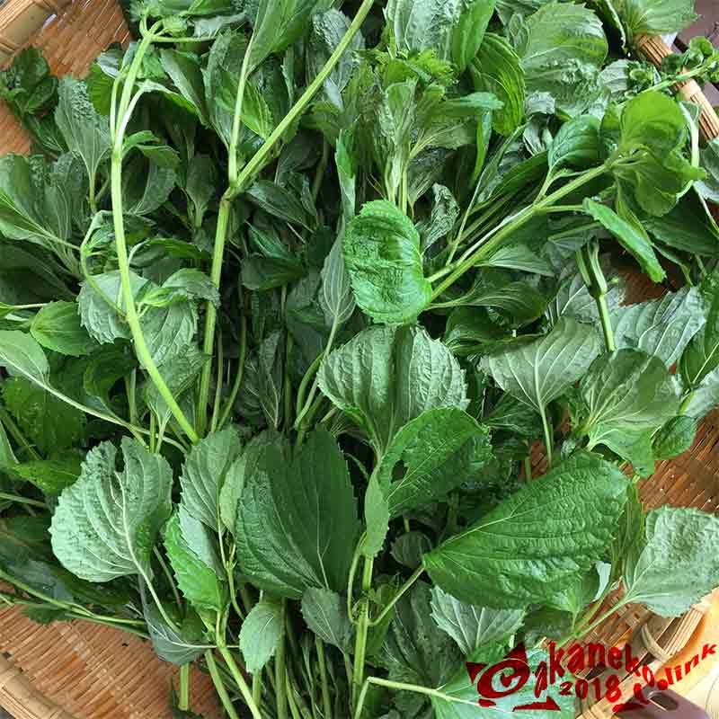 竹ザルに収穫した青紫蘇