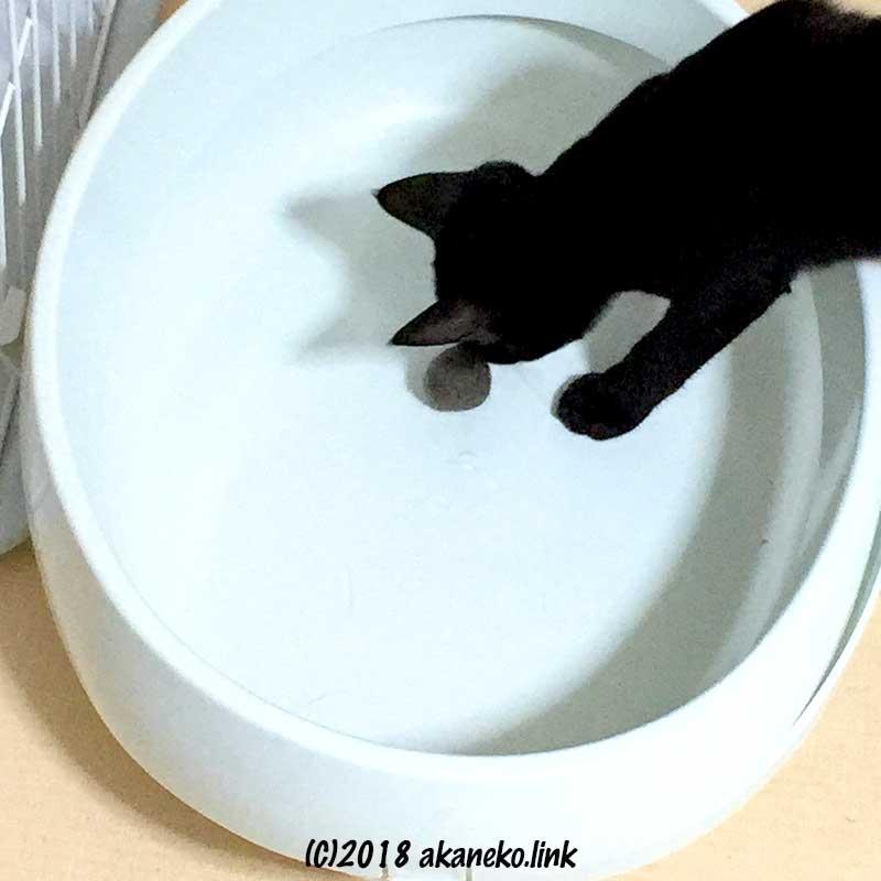 毛玉ボールと黒い子猫
