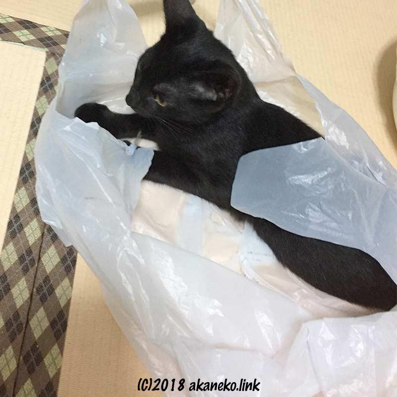 ビニール袋で遊ぶ黒い子猫