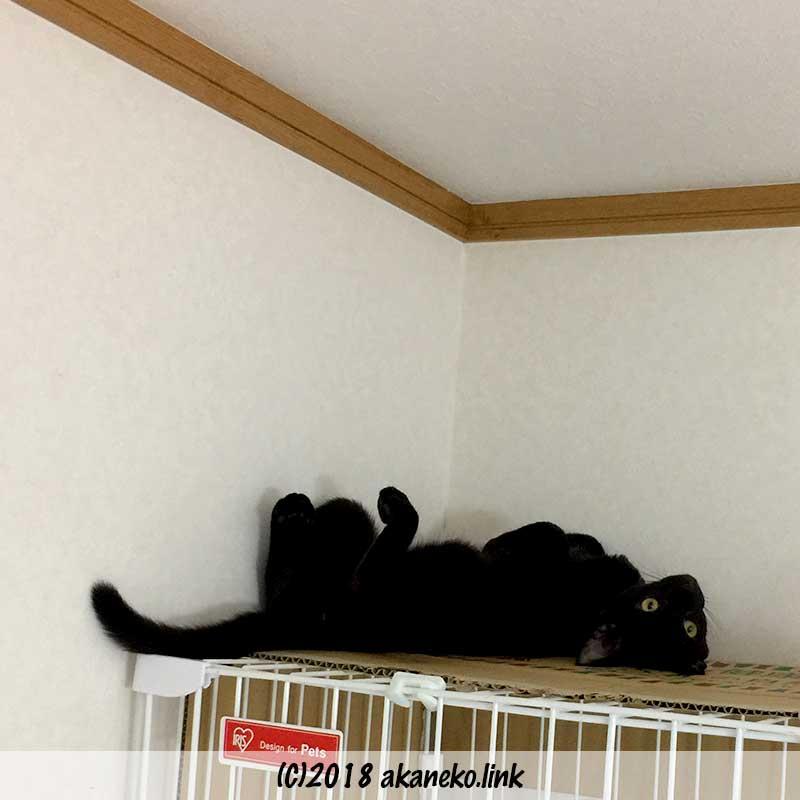 ケージの上で寝っ転がった黒猫
