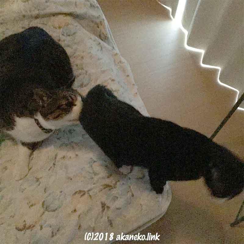 お尻をクンクンされる猫