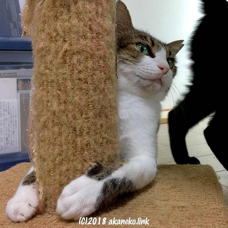 爪とぎポールにしがみつく猫