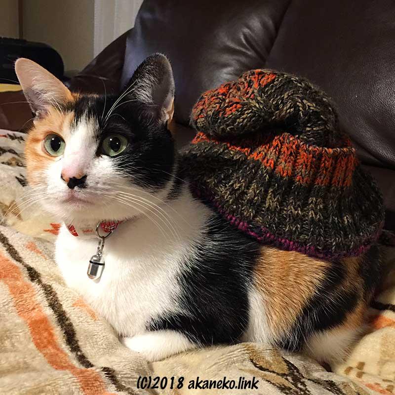 毛糸の帽子を背中にのせた三毛猫