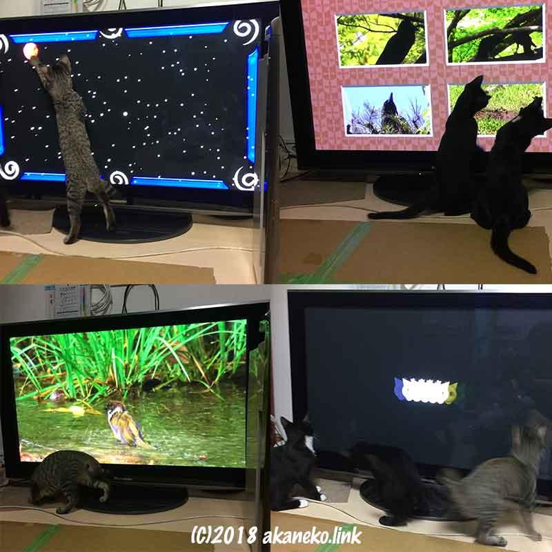 ネコが見るDVD ネコミルの画像に飛びつく子猫