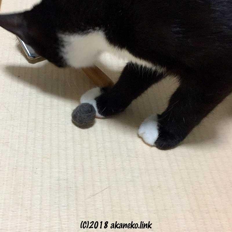 毛玉と猫ブラシと白黒子猫