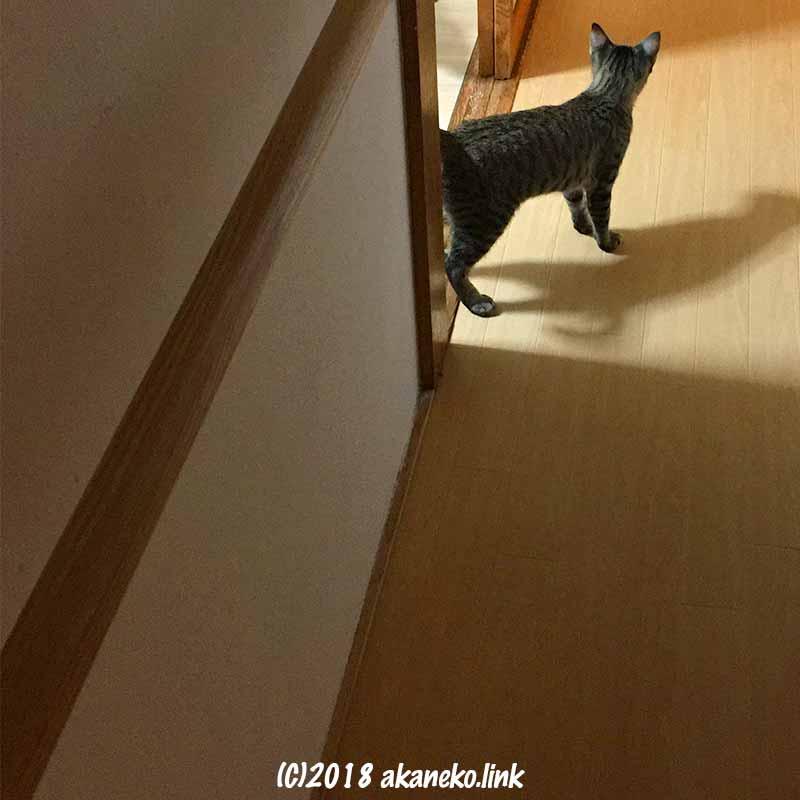 元野良猫の子猫初めて廊下に出る