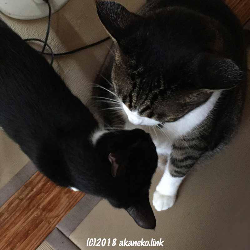 子猫と成猫のクンクン