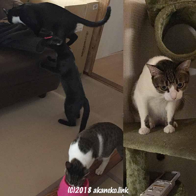 元野良猫一家、家中を探検