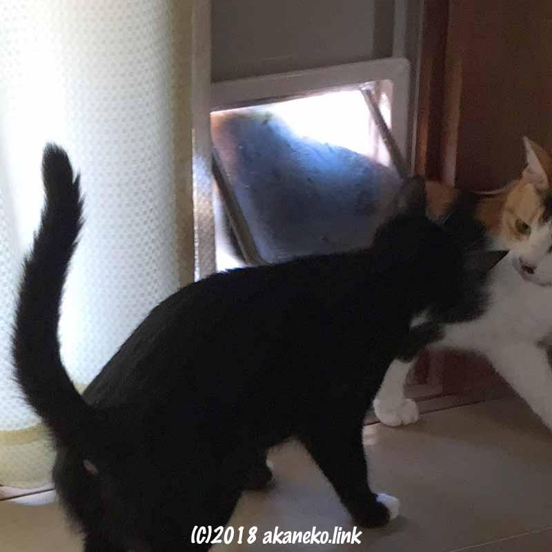 猫用ドアと2匹の猫