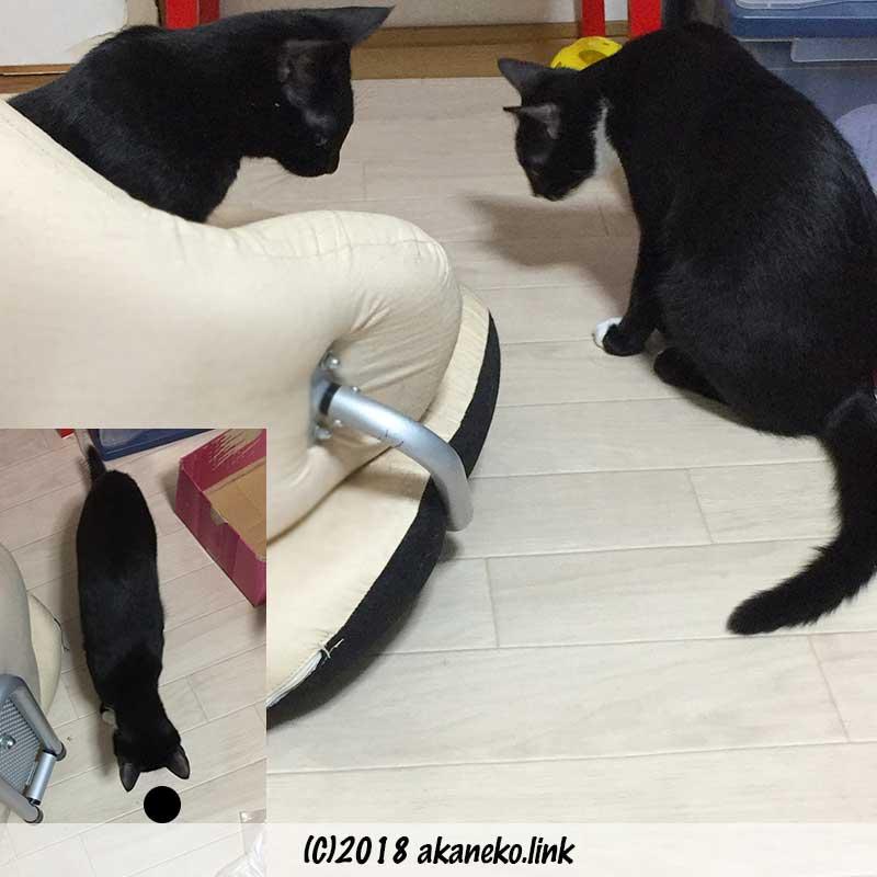 何かを見つめている二匹の猫、這い出したゴキブリ