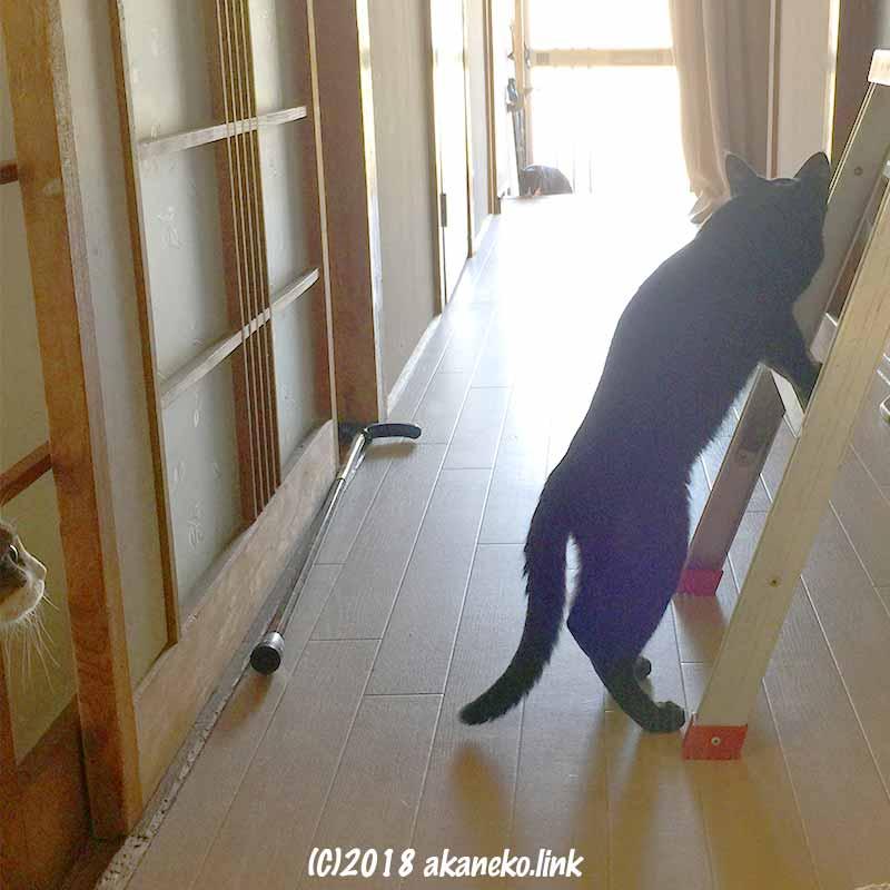 脚立に足をかけた猫