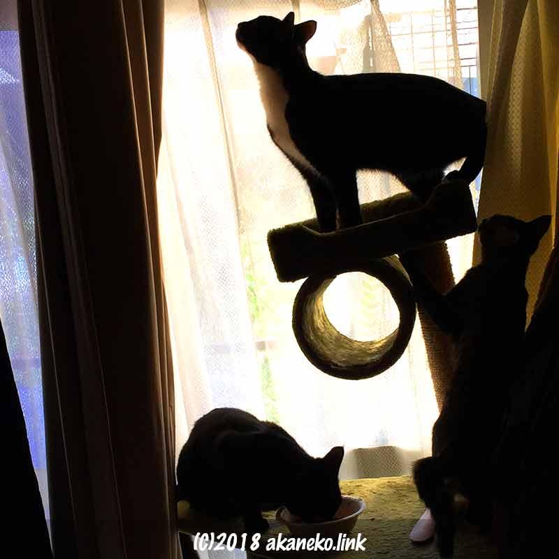 窓の前の3匹の子猫のシルエット
