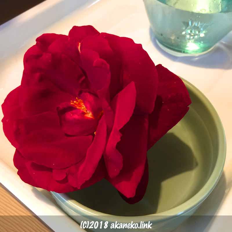 器に入れた赤いバラ、ミスターリンカーンの花