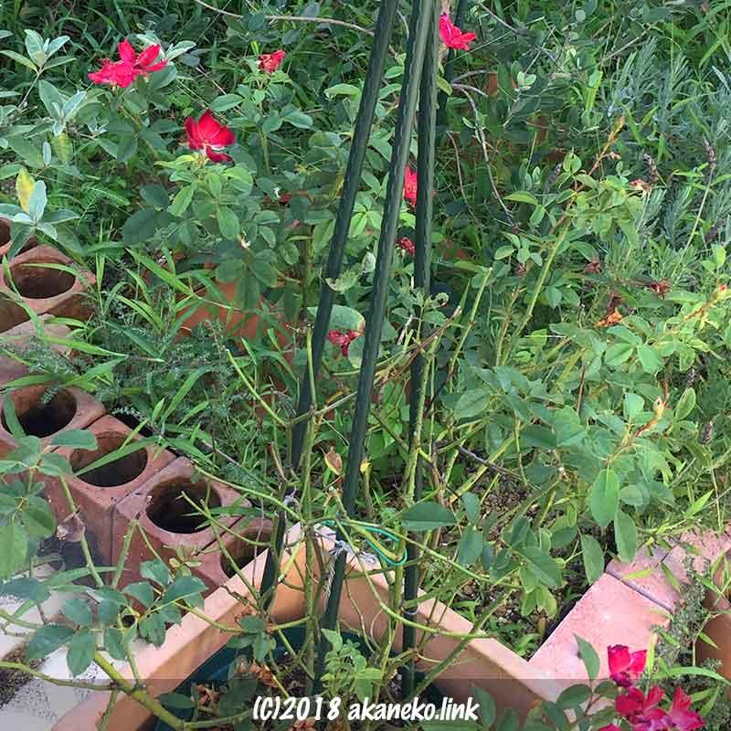 葉っぱが所々落ちたカクテルの鉢植え