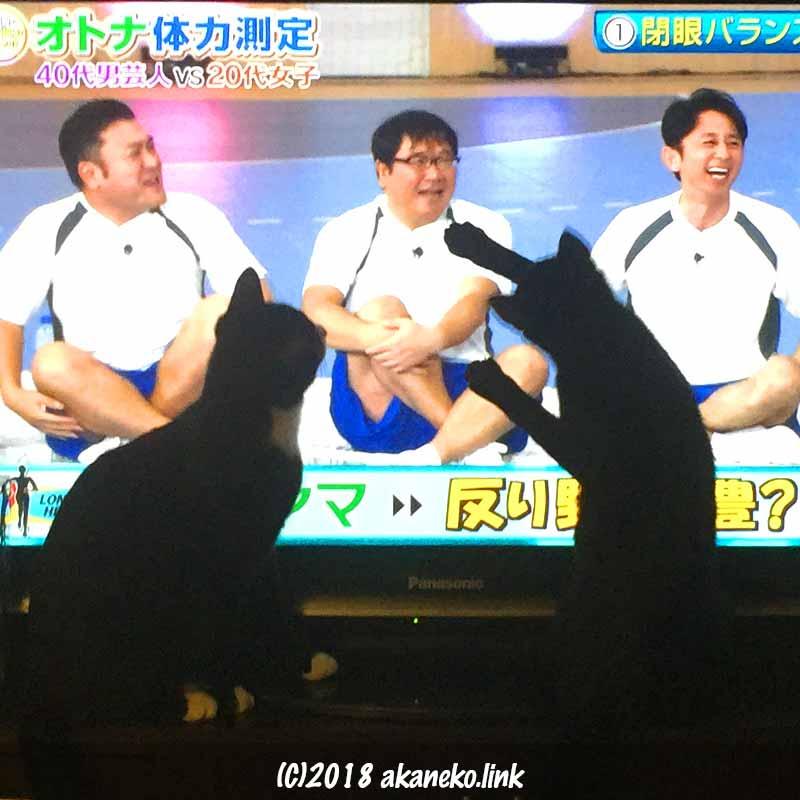 テレビを見る2匹の猫