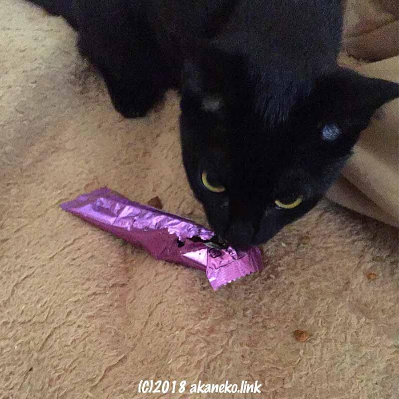 シーバの袋を食い破る黒猫
