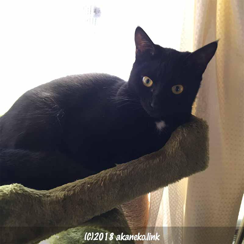 逆光の黒猫