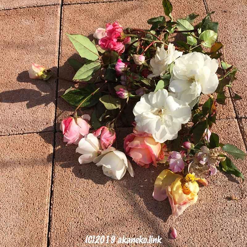 1月、冬剪定のためにカットしたバラの花がら