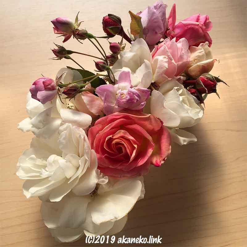 寒さでちょっと傷んだバラの花