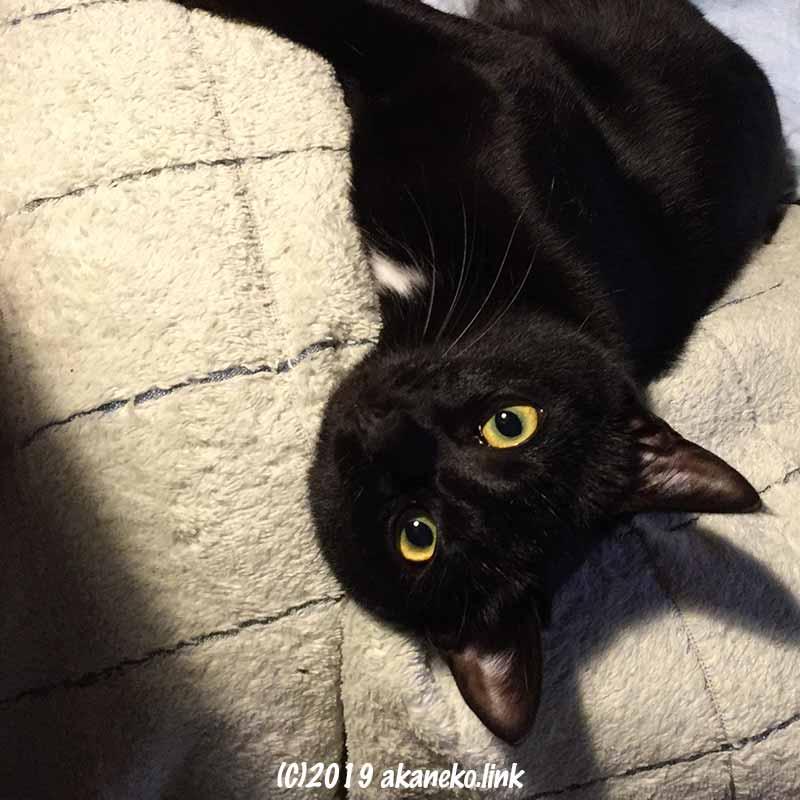 寝転んで見上げる黒猫