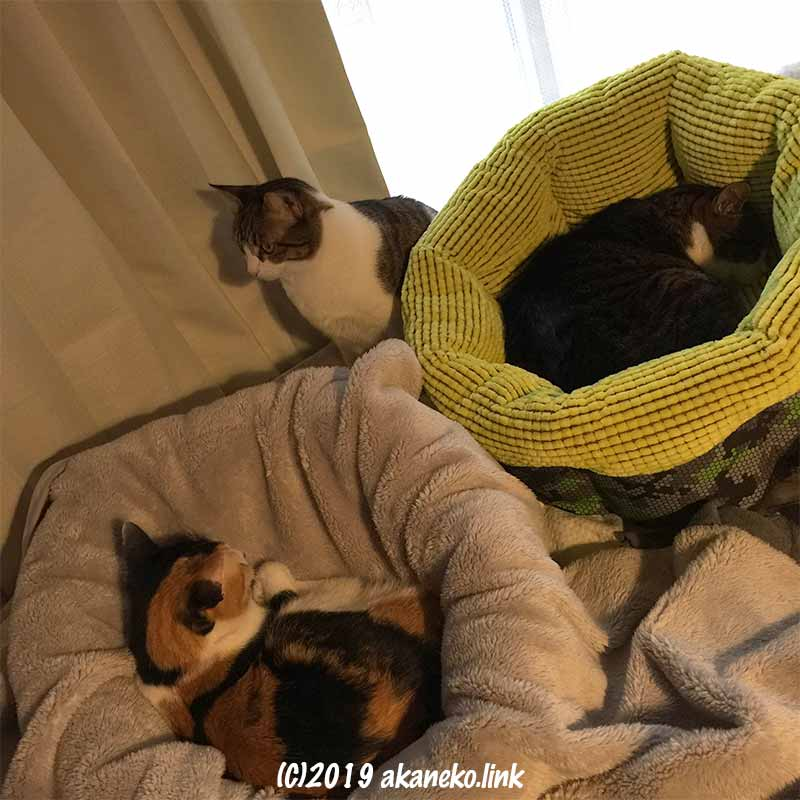 2つの猫ベッドと3匹の猫
