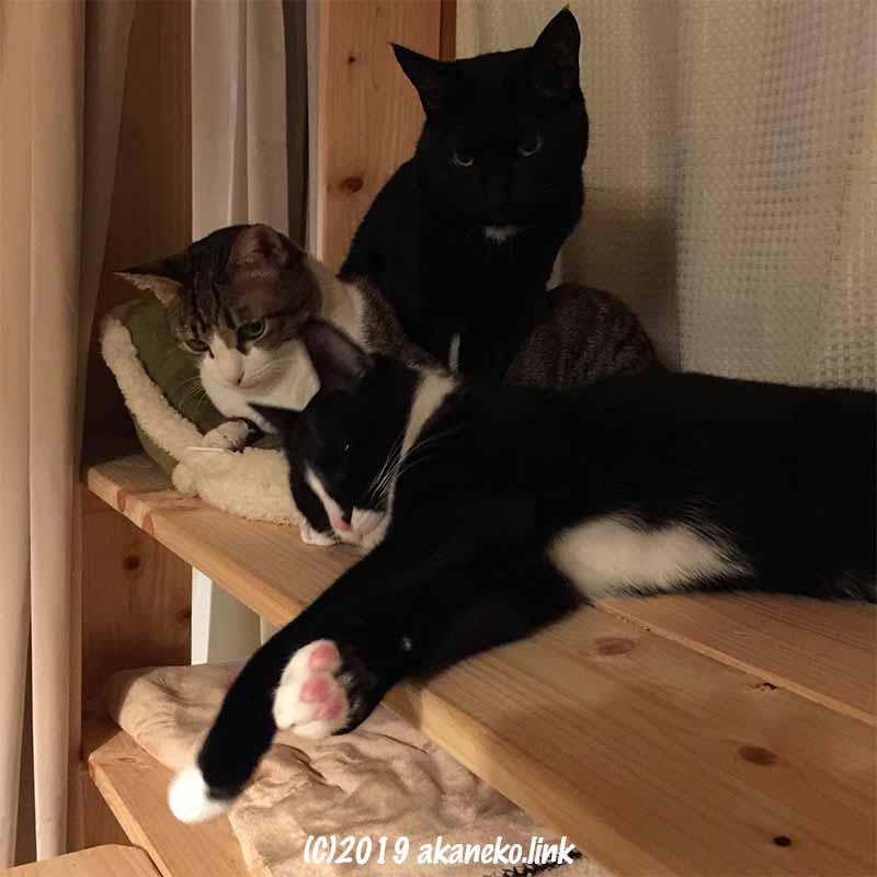 棚から下を見る3匹の猫