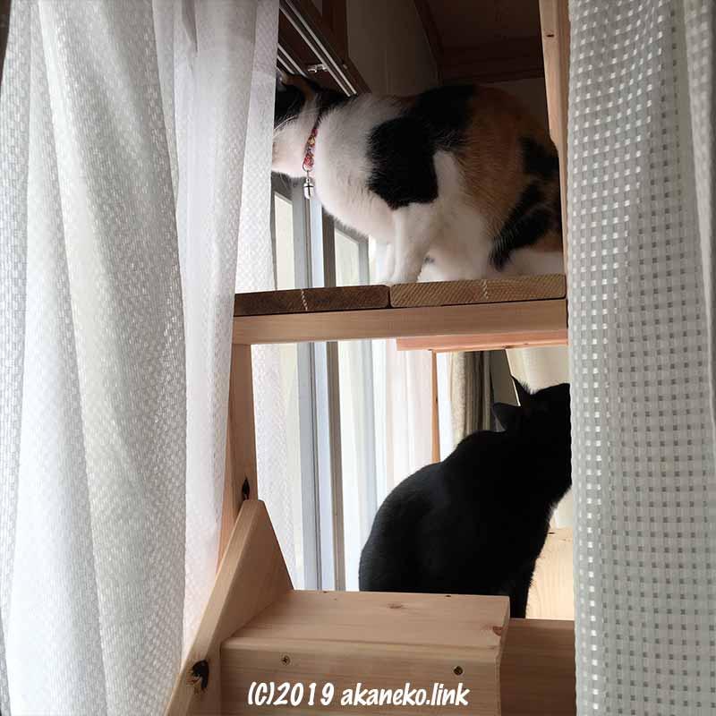 猫だなの上の三毛猫と黒猫