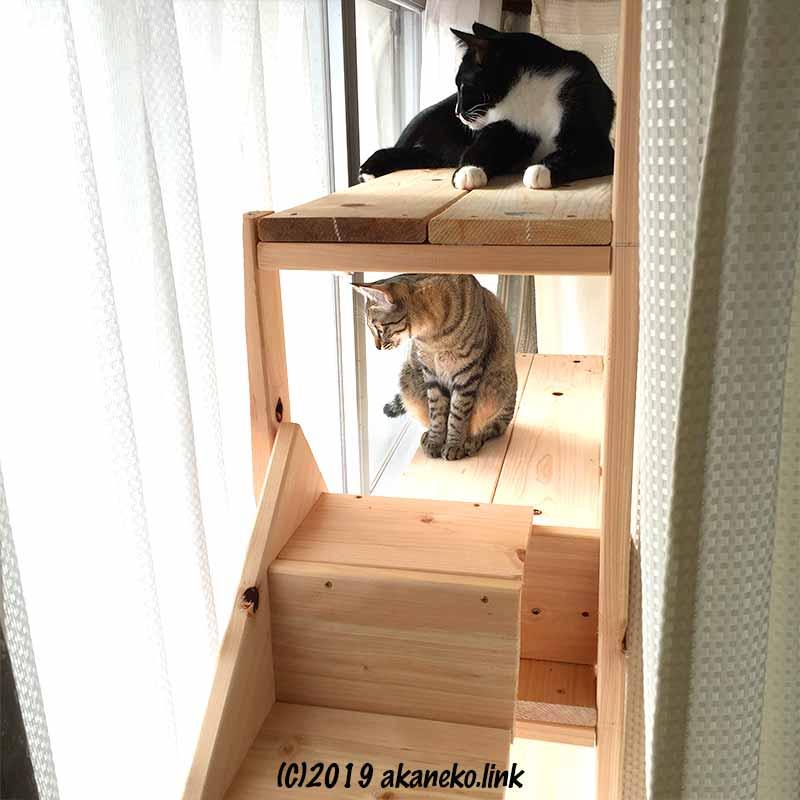 猫だなから外を見る二匹の猫