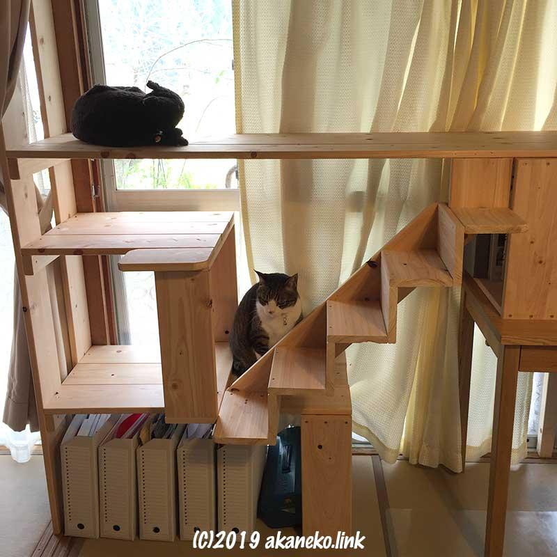 自作キャットウォークの階段の後ろに座るキジ白猫