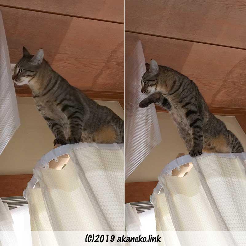 板を手で避けてエアコンの上に登ろうとする猫