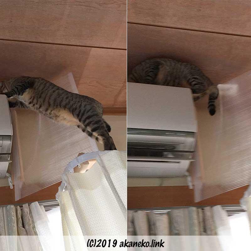 板を避けてエアコンの上に登る猫
