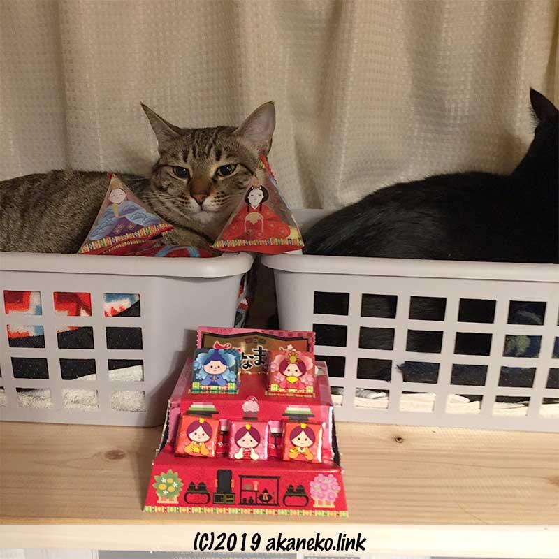 ひな祭りのお菓子と2匹の猫