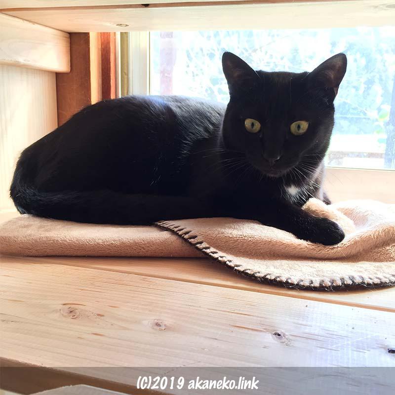 サッシを背に寝てこちら見る黒猫