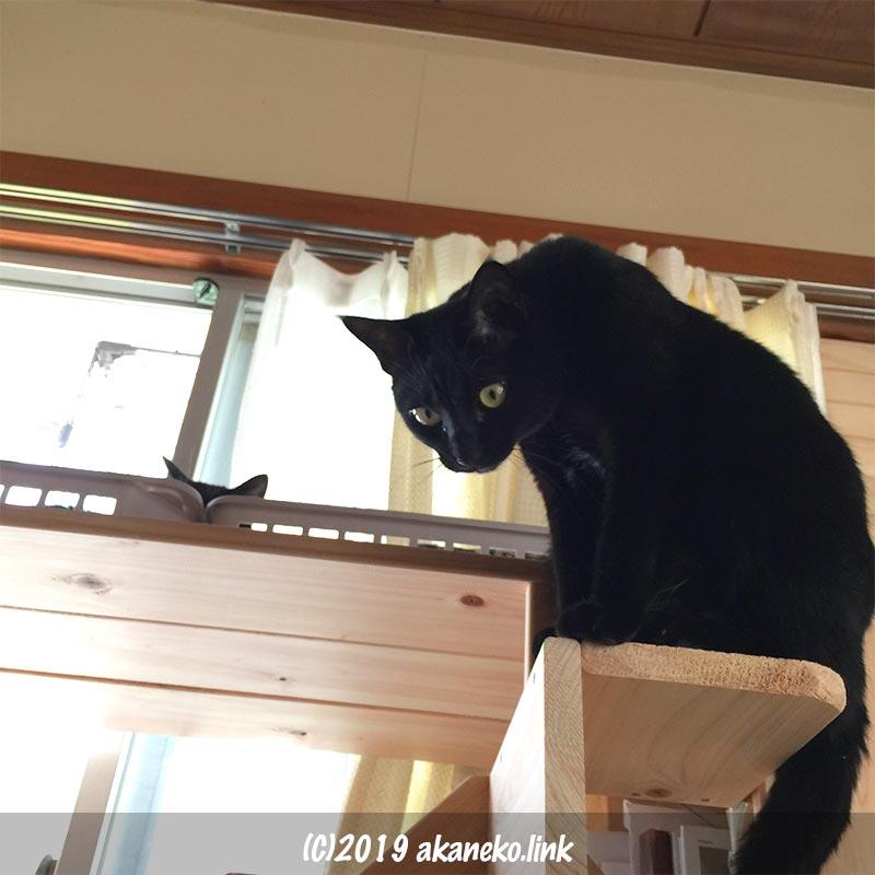 キャットウォークから見下ろす黒猫