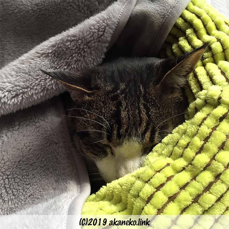 猫ベッドに埋もれて寝る猫