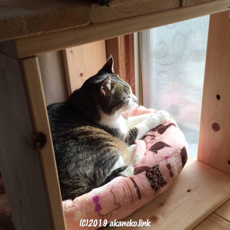 猫ベッドでくつろいでいる猫