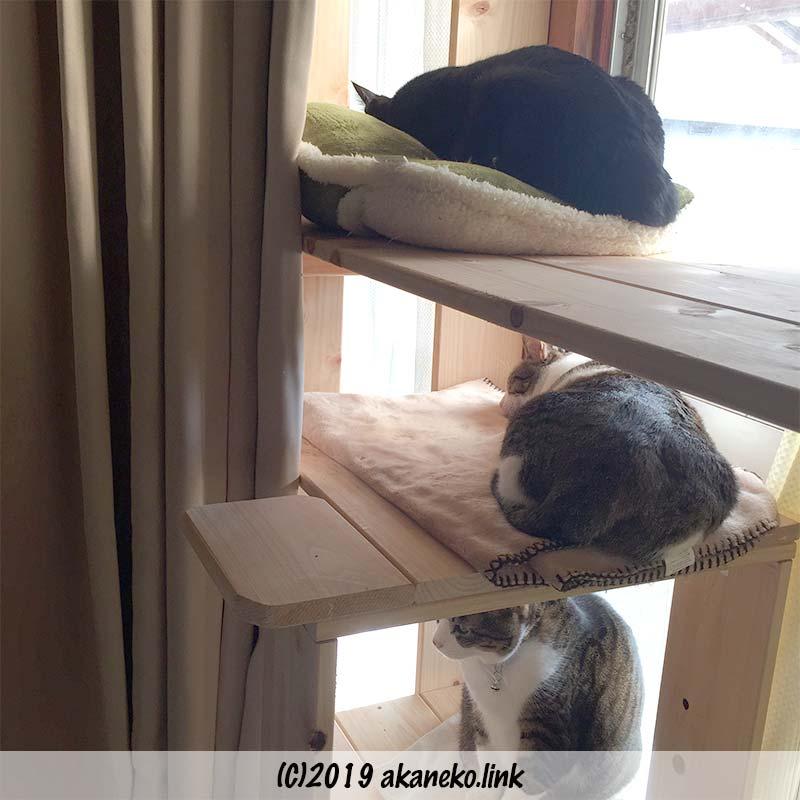 キャットウォークと3匹の猫