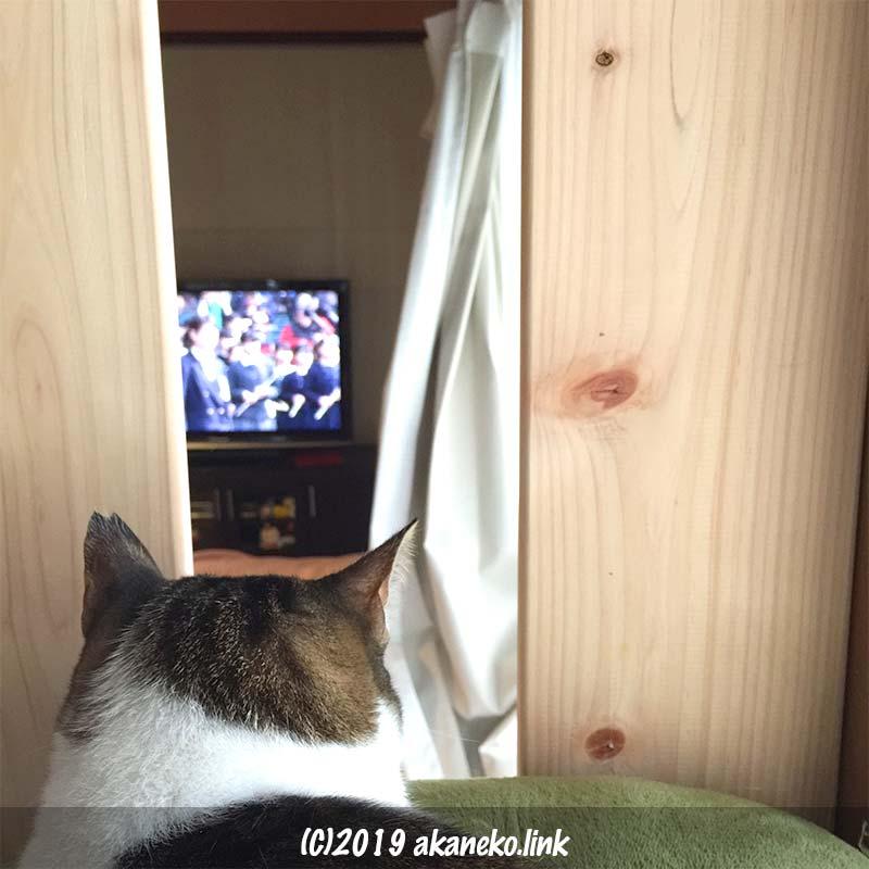 板と板の間からテレビを見る猫の後頭部