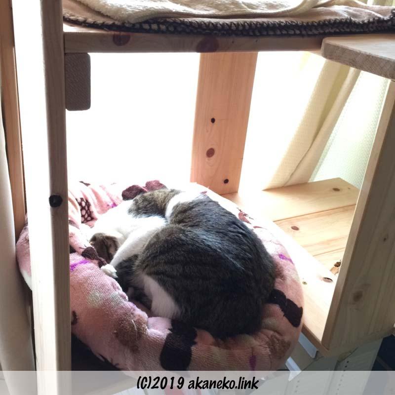 猫ベッドの中で丸くなって眠るキジ猫