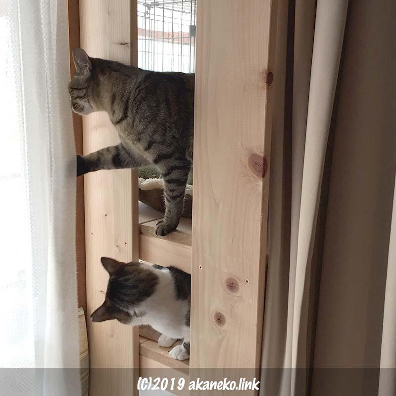 カーテンをめくって外を覗く2匹の猫