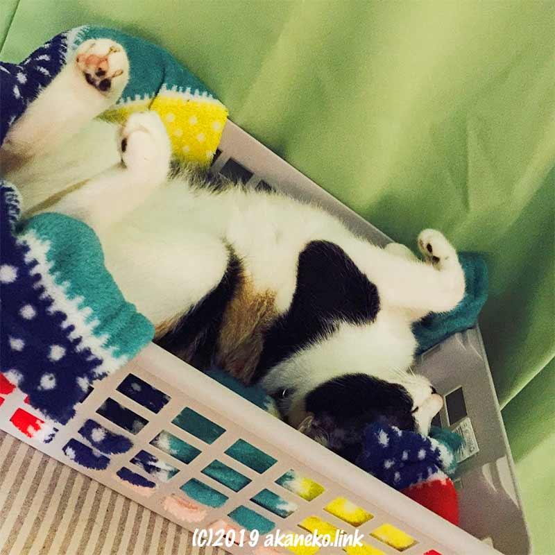 ダイソーの積み重ねできる収納バスケットで眠る三毛猫