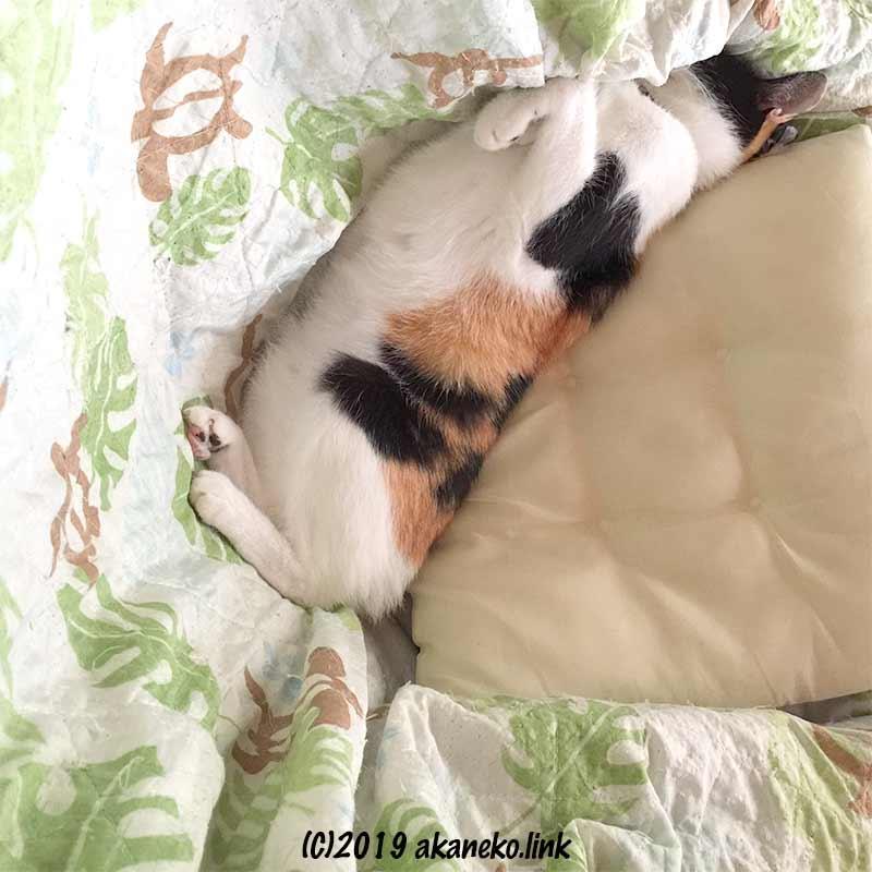 布に顔を埋めて寝ている三毛猫