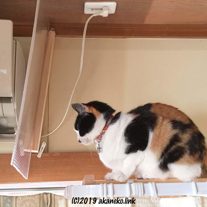 エアコン近くの棚の上に座る三毛猫