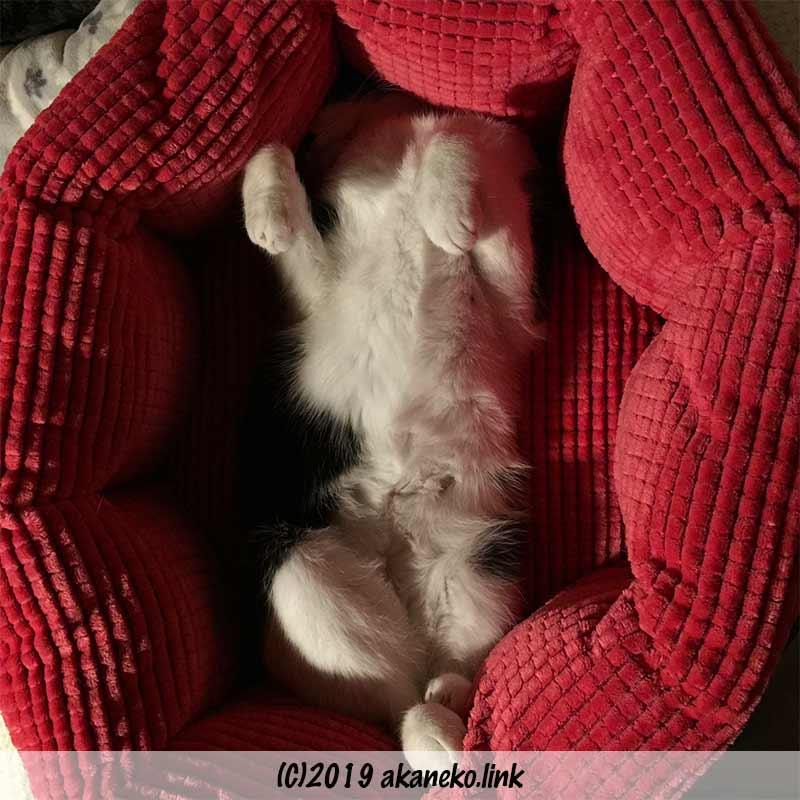 猫ベッドで仰向けに眠る猫