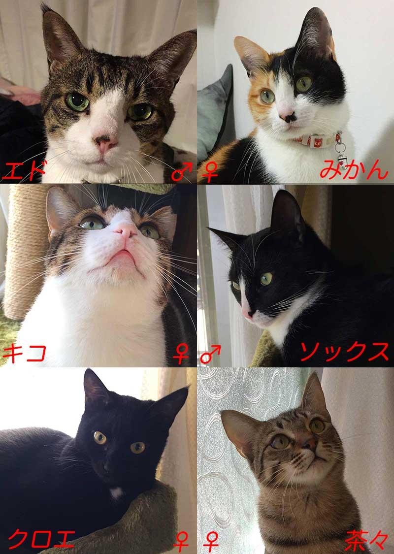 猫6匹の顔写真